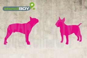 Bull Terrier und Boston Terrier
