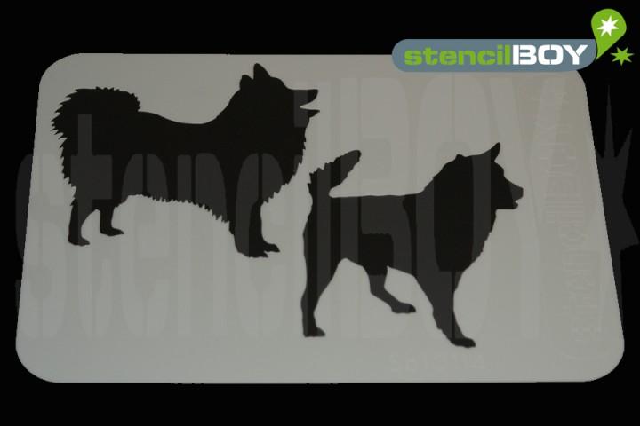 Japan Spitz und KAI-Hund