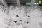 Greifvögel im Flug - Schablone